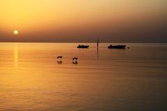 nad czerwonego morza wschód słońca Fotografia Royalty Free