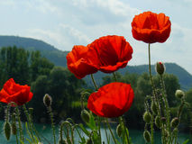 nad Danube wzgórzy Hungary maczki rzeczni Zdjęcia Royalty Free