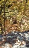 Nad drzewa Fotografia Stock
