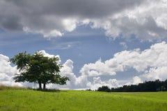 nad drzewem czereśniowy cloudscape Obrazy Royalty Free