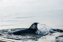 nad żebra rekinu woda Zdjęcie Stock