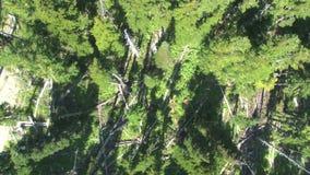 Nad kanadyjski las zdjęcie wideo