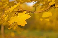nad kolor żółty tło liść zamazany kolorowy Fotografia Stock
