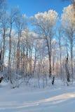 nad lasu krajobrazu strzału śniegu drzew zima zdjęcia royalty free