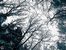 nad lasu krajobrazu strzału śniegu drzew zima fotografia stock