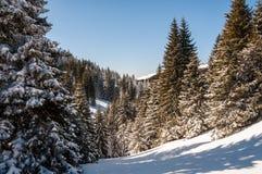 nad lasu krajobrazu strzału śniegu drzew zima obrazy royalty free