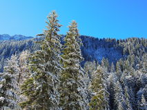 nad lasu krajobrazu strzału śniegu drzew zima Fotografia Royalty Free