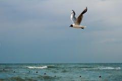 nad mewa morskim Obraz Stock