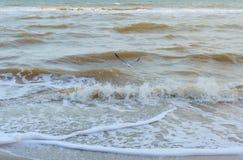 nad mewa morskim Bezpłatny seabird unosi się obrazy stock
