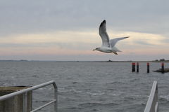 Nad morzem Seagull latanie Obraz Royalty Free