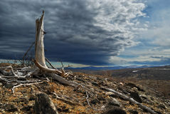 nad nieżywy lasowy thundercloud Fotografia Royalty Free