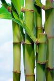 nad niebem bambusowi błękitny chmurni liść Zdjęcia Stock