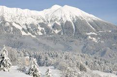 nad opadów śniegów drzewami świeże góry Zdjęcie Stock