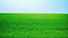 nad pola zieleni wiosna widok Fotografia Stock