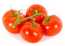 nad pomidorami biały Zdjęcie Stock