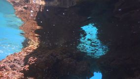 Nad rafa, mrowie dziecko ryba furażuje nad koralem zdjęcie wideo