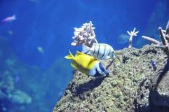nad rockowy ryba morze dwa Obrazy Stock