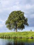 nad rzecznym drzewem Zdjęcia Stock