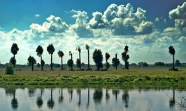 nad rzecznymi drzewami Fotografia Royalty Free