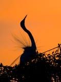 nad sylwetkowym niebem egret pomarańcze Zdjęcie Stock