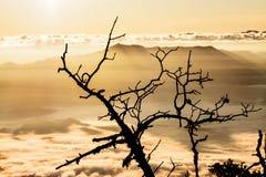 2195 nad teren jako chiang rożka dao wykoślawienia gromadzki doi wysokich przestawnych równych wapnia luang metrów halnych gór sz Zdjęcie Stock