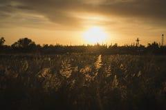 Nad trawą zmierzchu promień przy złotą godziną zdjęcie royalty free