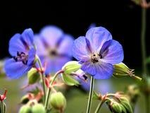 Nad van de bloem een insect 6 Stock Foto's