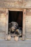 Nad van de kat hond Royalty-vrije Stock Afbeeldingen