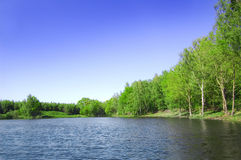 Nad van het meer bos. Stock Foto's