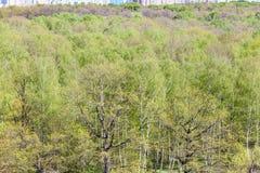 Nad widok miasto park z bujny zieleni ulistnieniem obraz stock