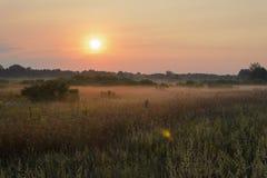 nad wodą łąkowy mgła ranek Zdjęcia Royalty Free
