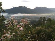 nad wodą łąkowy mgła ranek Obraz Stock