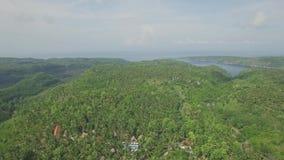 Nad wysp drzewek palmowych antena 4k zbiory wideo