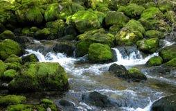 Nad zielonymi mechatymi skałami lasowy strumień. Zdjęcia Royalty Free