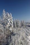 nad zima lasu krajobraz Zdjęcia Stock