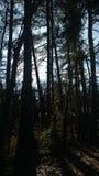 Nada pero bosque Imágenes de archivo libres de regalías