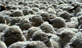 Nada pero lanas 10 Foto de archivo