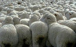 Nada pero lanas 3 Foto de archivo
