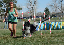 NADAC dog agility trial Royalty Free Stock Images