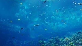 Nadada colorida de los pescados por un arrecife de coral metrajes