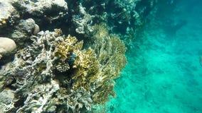 Nadada colorida dos peixes entre o coral filme