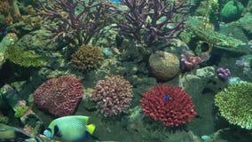 Nadada colorida marina de los pescados entre los corales metrajes