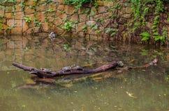 Nadada das tartarugas de mar no parque da água foto de stock