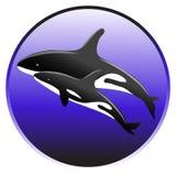 Nadada de la orca del vector en el océano con un bebé Fotos de archivo libres de regalías
