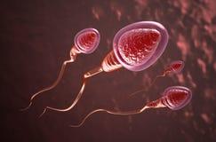 Nadada de las células de esperma al huevo