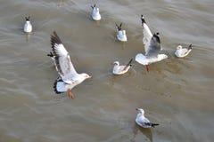 Nadada de las gaviotas en el mar imagen de archivo