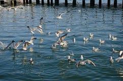 Nadada de las gaviotas en el mar Foto de archivo libre de regalías
