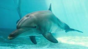 Nadada de los delfínes en el mar