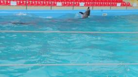 Nadada de los delfínes en la piscina metrajes