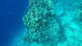 Nadada de los pescados entre los arrecifes de coral almacen de video